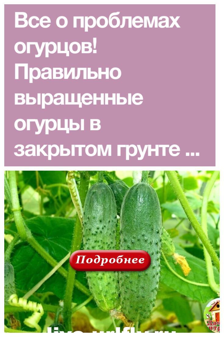 О проблемах огурцов